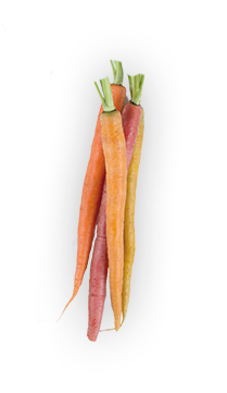 The Carrot - The Carrot plant is  biennial, which means it will grow for 2 years and then dies, passing its seeds along in lacy flowers. While we tend to picture carrots as bright orange, they can actually range from deep purple to ivory white in color. - via: Evolution Fresh