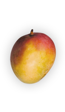 Mango - Grown in South Asia for thousands of years, the mango is one of the most popular fruits in the world. Its trees can grow well over 100 feet tall. - via: Evolution Fresh